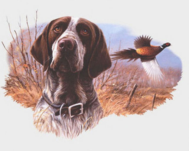 Buy Field Hunt Dog Cross Stitch Pattern L@@K at AtomicMall.com
