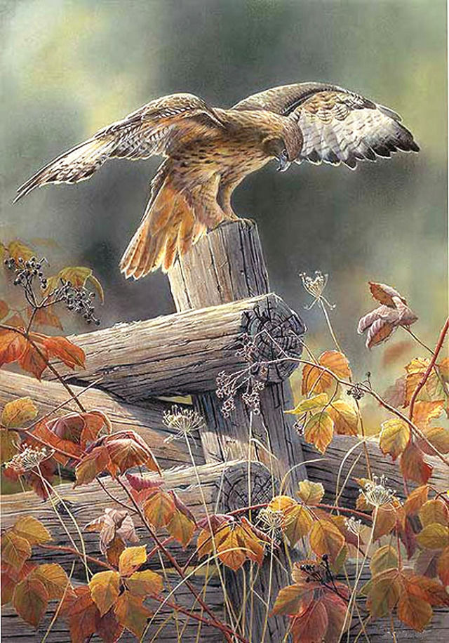 Buy Red TaiLed Hawk Cross Stitch Pattern LOOK at AtomicMall.com