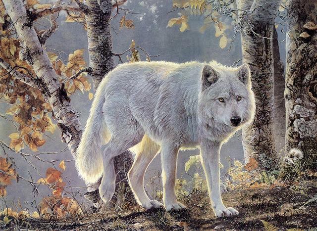 autum white wolf cross stitch pattern look