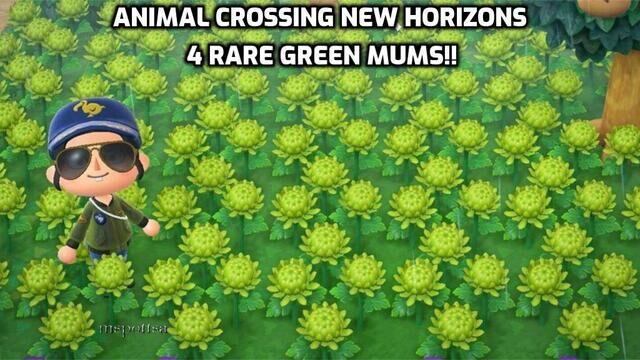 Atomic Mall   4 Rare Green Mums Hybrid Flowers Bundle Lot ...